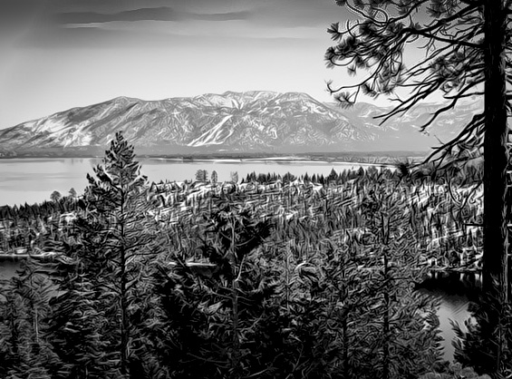 South Lake Tahoe-Trees